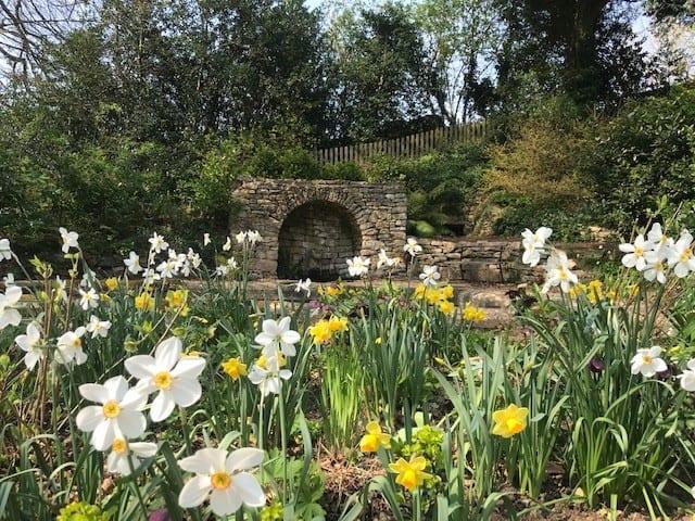 Garden update 17 April 2020